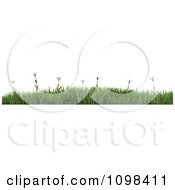 3d Border Of Wild Daisy Flowers In Green Grass