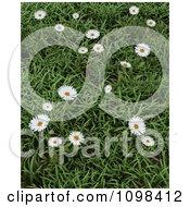 3d Wild Daisies In Green Grass