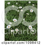 Clipart 3d Wild Daisies In Green Grass Royalty Free CGI Illustration