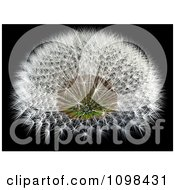 3d Dandelion Seed Head With A Fibonacci Sequence Pattern 4