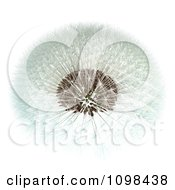 3d Dandelion Seed Head Shown With A Fibonacci Sequence Pattern 1