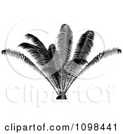 Clipart Silhouetted Palm Plant Royalty Free Vector Illustration by dero