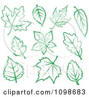 Green And White Leaves 2