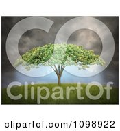 Clipart 3d Tree With Umbrella Shaped Canopy Under Dark Storm Clouds Royalty Free CGI Illustration by Mopic