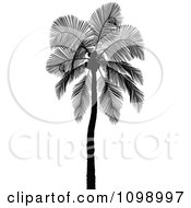 Clipart Silhouetted Coconut Palm Tree Royalty Free Vector Illustration by dero