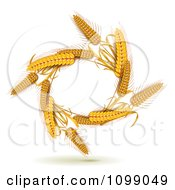 Oval Of Whole Grain Wheat