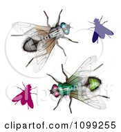 Clipart 3d Colorful Flies Royalty Free Vector Illustration