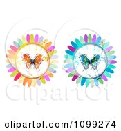 Orange And Blue Butterflies In Flower Petal Circles