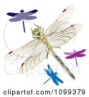 3d Colorful Dragonflies