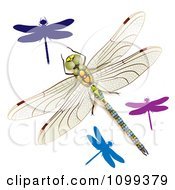 Clipart 3d Colorful Dragonflies Royalty Free Vector Illustration
