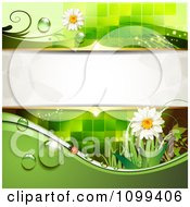 Clipart Background Of A Ladybug With Daisies Dew Green Foliage And Copyspace Royalty Free Vector Illustration by merlinul