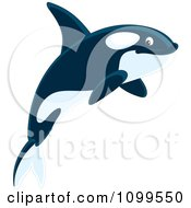 Clipart Happy Orca Killer Whale Royalty Free Vector Illustration