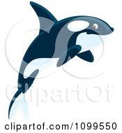 Happy Orca Killer Whale