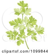 Clipart Sprig Of Fresh Green Parsley Royalty Free Vector Illustration