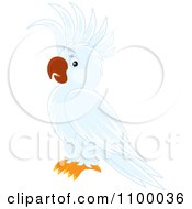 Clipart White Cockatoo Parrot Royalty Free Vector Illustration