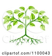 Clipart Organic Green Plant With Leaves And Roots Royalty Free Vector Illustration