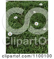 Clipart 3d Background Wild Daisies In Green Grass Royalty Free CGI Illustration