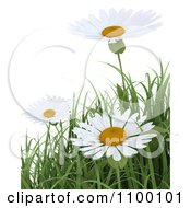 Clipart 3d White Daisy Flowers And Spring Grass Over White Royalty Free CGI Illustration