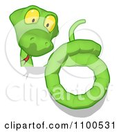 Clipart Green Snake On A Blank Sign Royalty Free CGI Illustration