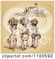 Clipart Brown Sketch Of Winery Worker Ladies With Baskets Of Grapes On Their Heads Royalty Free Vector Illustration by Eugene