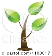 Clipart Organic Green Tree Royalty Free Vector Illustration