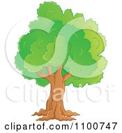 Clipart Mature Tree With A Green Canopy Royalty Free Vector Illustration by visekart