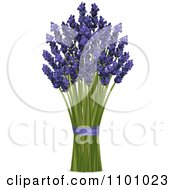 Bunch Of Lavender Stalks And Flowers With Purple Ribbon
