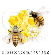 Clipart Honey Bees Over Honeycombs With A Daisy Royalty Free Vector Illustration