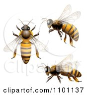 Clipart Honey Bees Shown From Above The Side And In Flight Royalty Free Vector Illustration