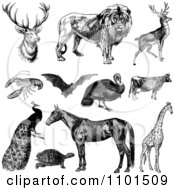 Clipart Retro Black And White Wild And Farm Animals Royalty Free Vector Illustration by BestVector