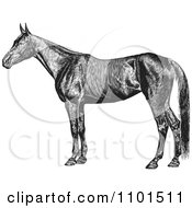 Clipart Retro Black And White Farm Horse Royalty Free Vector Illustration
