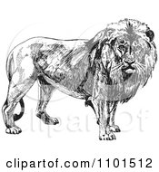 Clipart Retro Black And White Male Lion Royalty Free Vector Illustration
