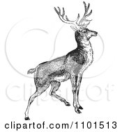 Clipart Retro Black And White Alert Buck Deer Royalty Free Vector Illustration