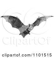 Retro Black And White Flying Bat