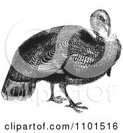 Clipart Retro Black And White Wild Turkey Royalty Free Vector Illustration