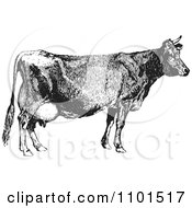 Clipart Retro Black And White Farm Cow Royalty Free Vector Illustration