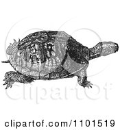 Clipart Retro Black And White Turtle Royalty Free Vector Illustration