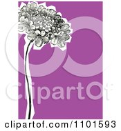 Clipart Hydrangeas With A White Cutout On Purple Royalty Free Vector Illustration