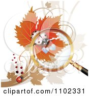 Magnifying Glass Over A White Heart Spotted Ladybug 1