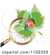 Magnifying Glass Over A Heart Spotted Ladybug