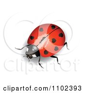 Red Heart Spotted Ladybug