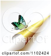 Clipart Butterfly On A Turning Yellow Page 2 Royalty Free Vector Illustration by merlinul