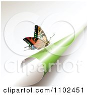 Clipart Butterfly On A Turning Green Page 1 Royalty Free Vector Illustration