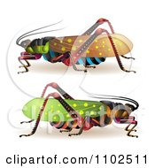 Clipart Colorful Locusts Royalty Free Vector Illustration by merlinul