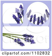 Clipart Square Round And Rectangular Templates With 3d Lavender Flowers Royalty Free Vector Illustration by elaineitalia