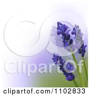 Clipart 3d Lavender Flowers Over White Purple And Green Gradient Royalty Free Vector Illustration by elaineitalia