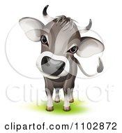 Clipart Cute Curious Swiss Cow Cocking Its Head Royalty Free Vector Illustration