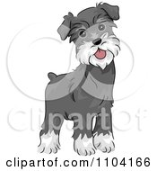 Clipart Happy Alert Miniature Schnauzer Dog Royalty Free Vector Illustration