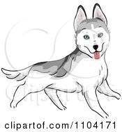 Clipart Happy Siberian Husky Dog Running Royalty Free Vector Illustration by BNP Design Studio
