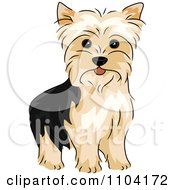 Clipart Happy Alert Yorkshire Terrier Yorkie Dog Royalty Free Vector Illustration